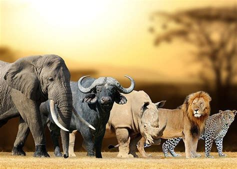 Which Big Five African Animal Are You? - Quiz | African